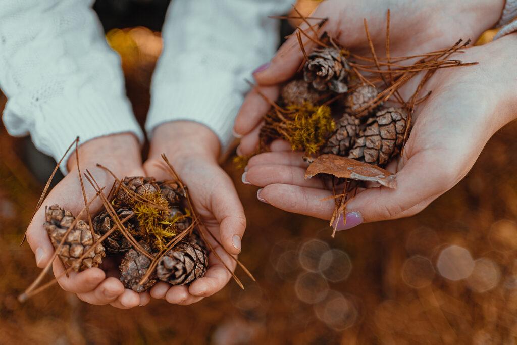 zdjęcie jesień